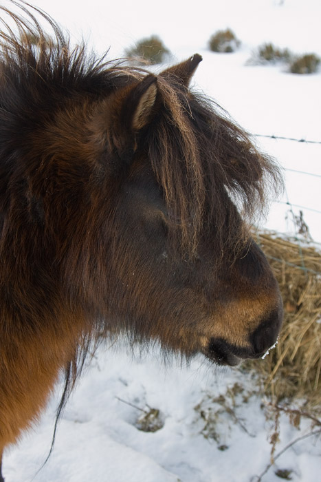 furry ponies or wooly mammoths