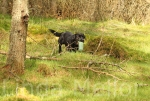 Retrieving in the woods