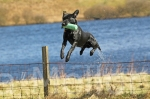 01scottish gundog association