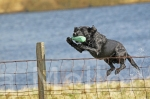02scottish gundog association