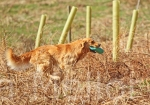 07scottish gundog association