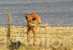 25scottish gundog association