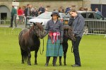 The winner Shetland and her foal