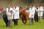 Highland cattle in main ring
