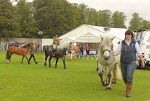 Horses in the main ring parade