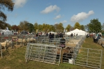 Sheep pens at Fife Show