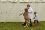 Angus show 201220