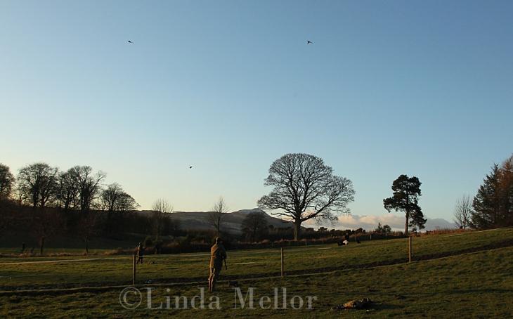 Balbirnie High Pheasants, Fife