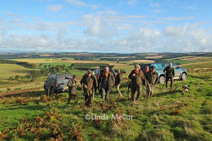 Ferreting for rabbits on the Lammermuir hills, September 2012