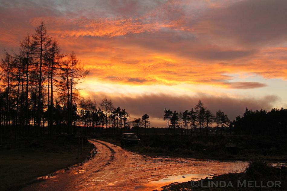Shoot Day Sunset Balbirnie Estate Fife Linda Mellor