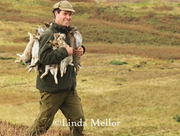 Ferreting for rabbits on the Lammermuir hills, Scotland
