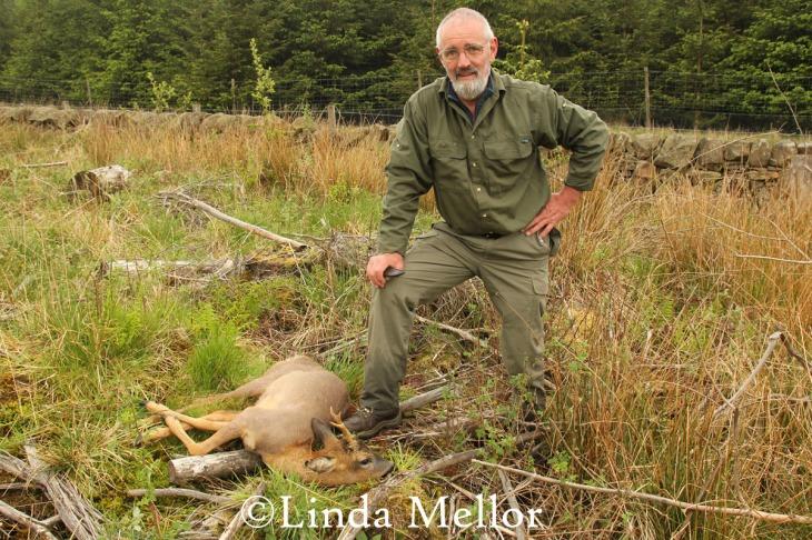 Roe deer management in tree plantation, Fife