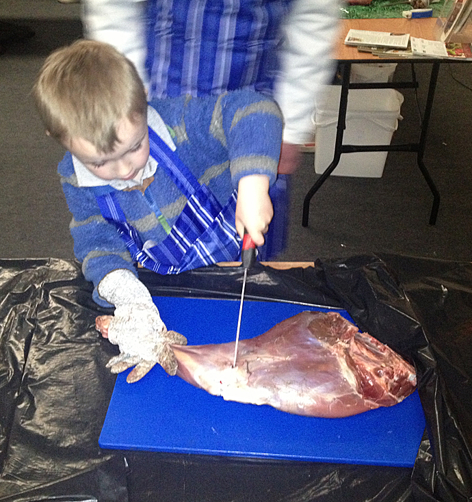 4 yr old McKenzie Buchan taking part in the butchery demo, pix by Dad Eddy