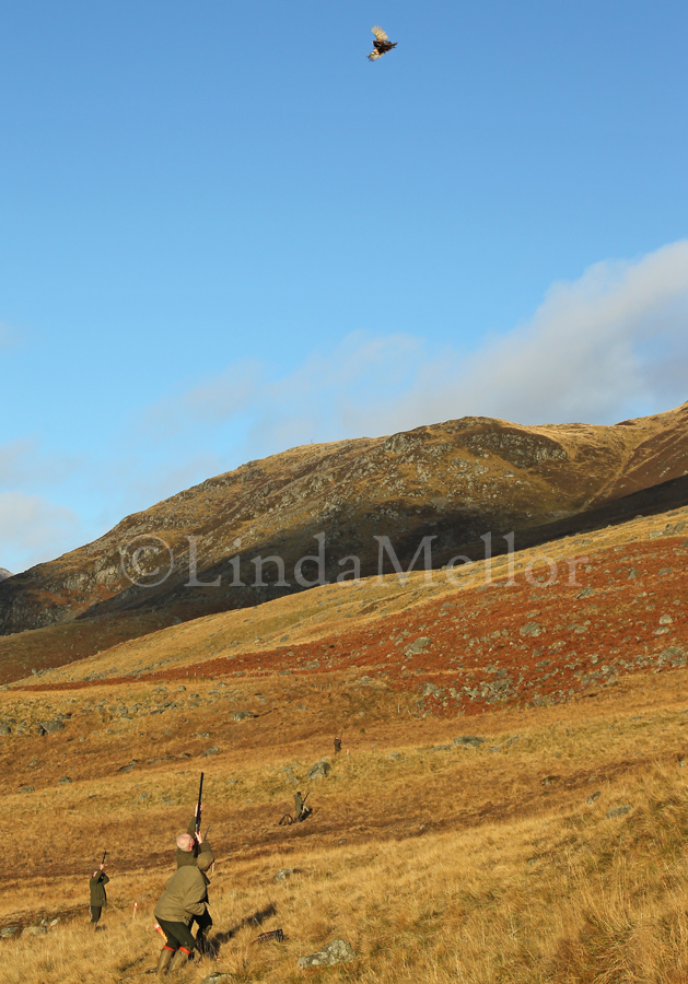 Driven shooting in Glen Clova, Scotland