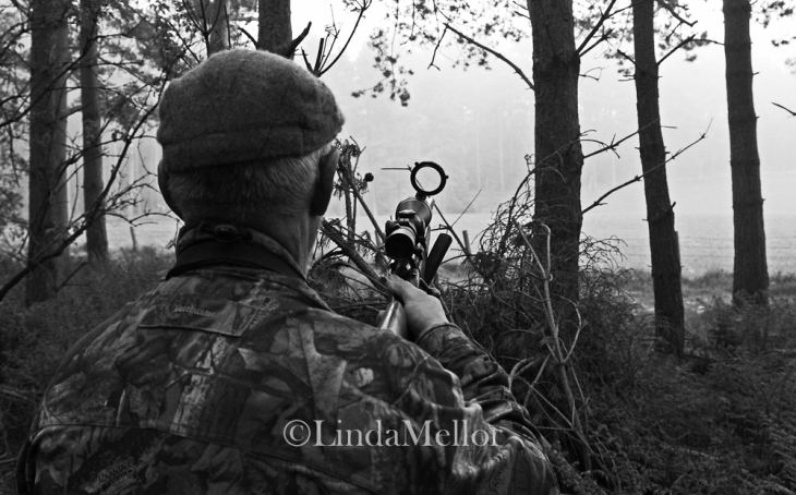 Roebuck stalking in Scotland