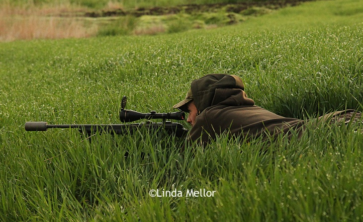 Roe buck deer stalking, lying low with a Steyr Mannlicher pro-hunter