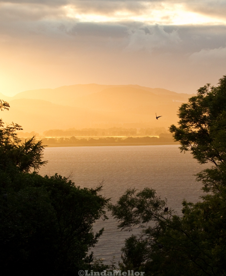 colourful diffused light sunset with pigeon. looking through the trees over the Tay estuary