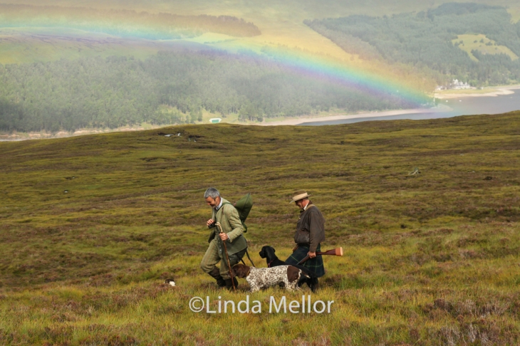 Shooting grouse over pointers, Drumochter, Scotland