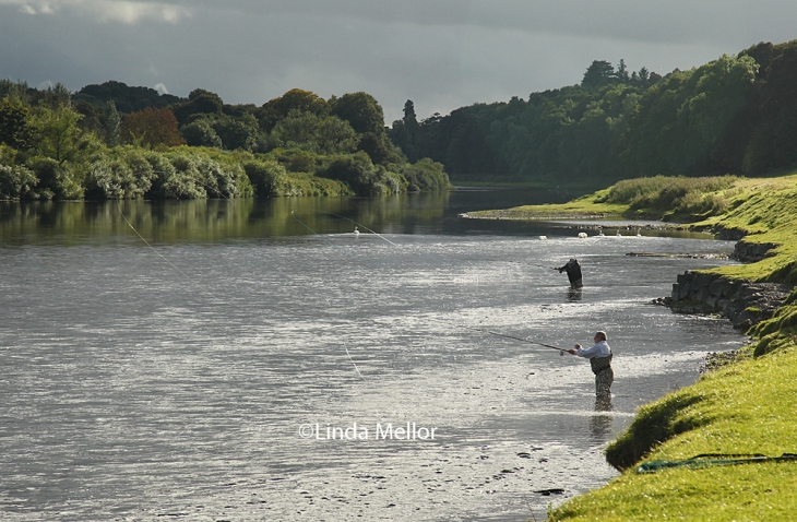 Salmon Fishing on ladykirk beat, the Tweed, Scotland