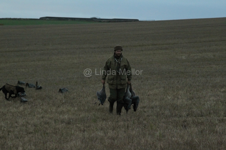 geese_shoot39