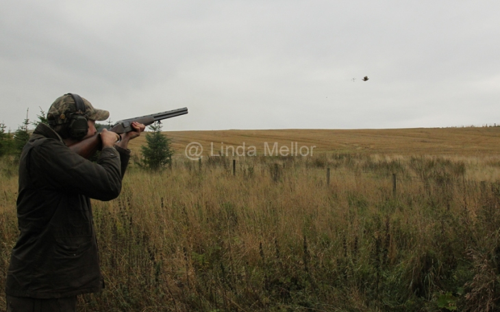 Driven pheasant and duck shoot