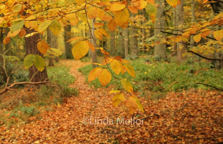 Beautiful autumn woodland colours