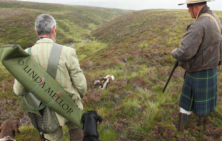 First retrieve of the day, shooting grouse over pointers in August at North Drumochter in Scotland