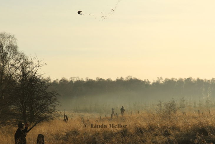 Light mist on the first pheasant drive of the day