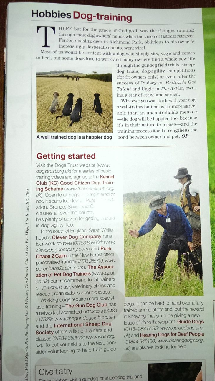 one of my gun dog training images in January's 2014 Country Life Magazine