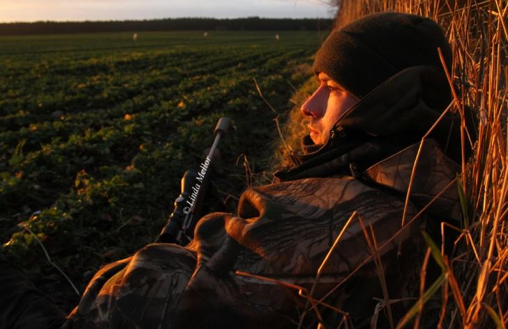 Roe doe stalk at sunrise, Scotland