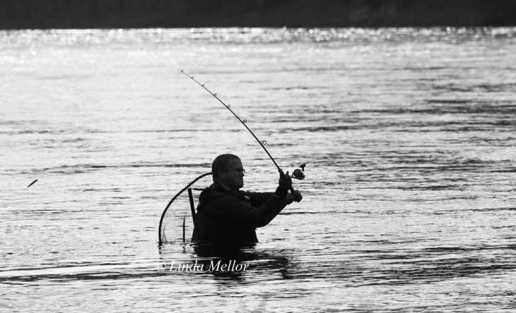 Salmon fishing newtyle beat river tay scotland