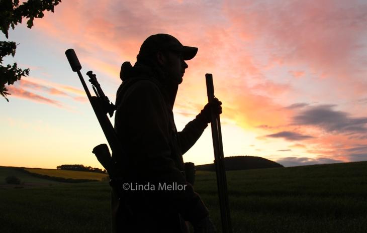 Colourful dawn roe buck stalk