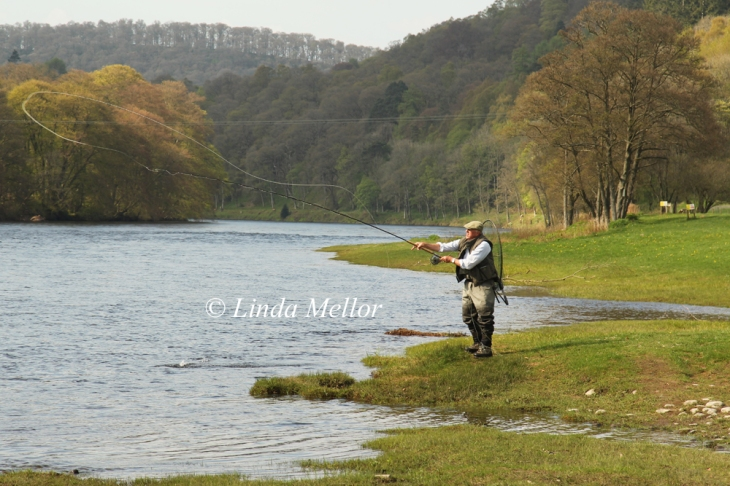 Newtyle Beat in the sunshine, Salmon Fishing