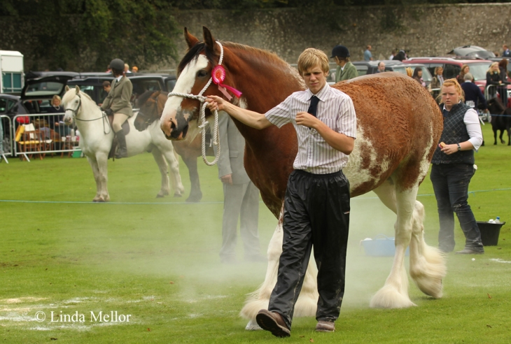 Clydesdale Horse, Kinross Show Archives