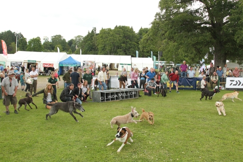 Terrier racing at the GWCT Scottish Game Fair 2014
