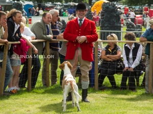 Happy huntsman, hound class, Lowther show, Cumbria