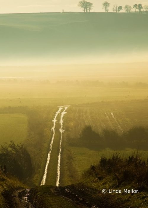 misty morning down a farm track