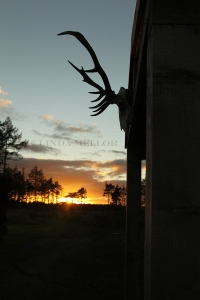 Sunset and antlers