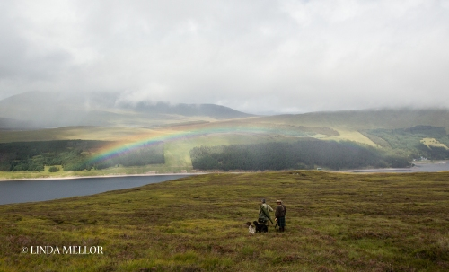 Shooting grouse over pointers in Scotland