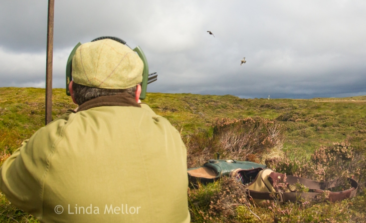 Driven grouse day, fasque estate, scotland. Shooting season starts 12th August.