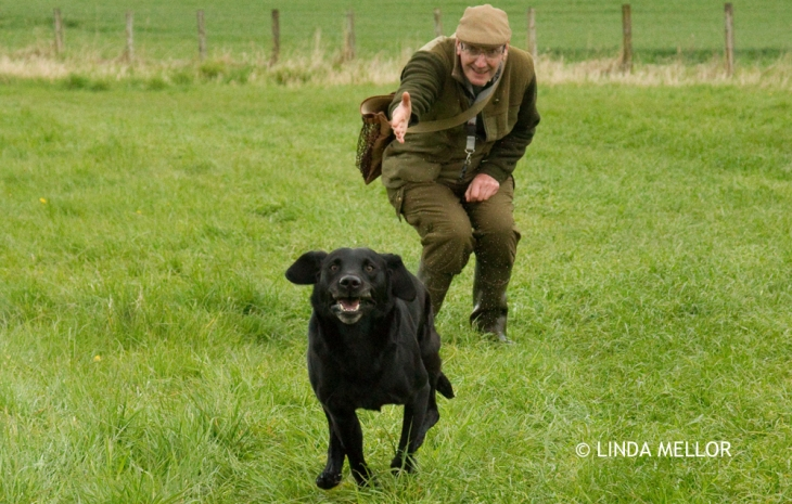 Handler sending his gundog out on a retrieve during a training session