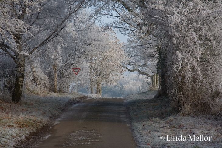 frosty scene of frost on trees and road