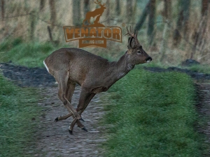 venator_roe_buck_with_logo